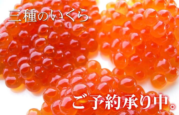 Ikura3720
